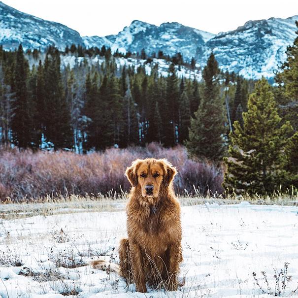 perro-aspen-viajes-aventura-hunter-lawrence (18)