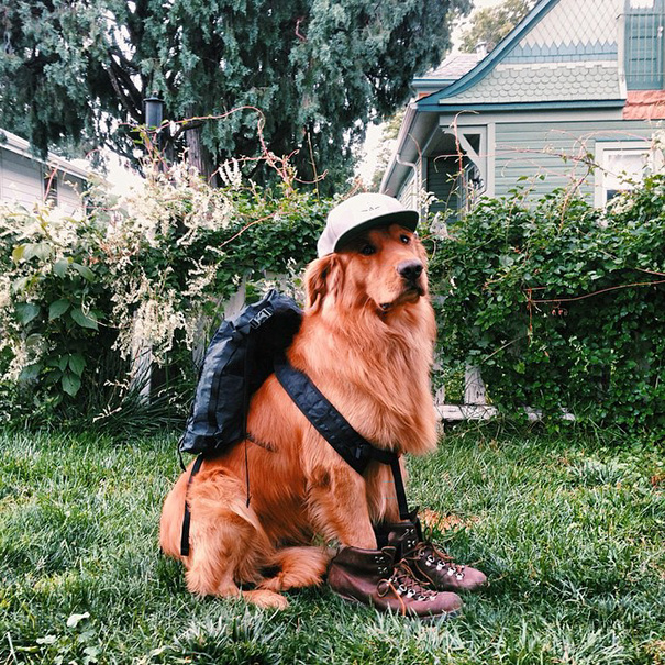 perro-aspen-viajes-aventura-hunter-lawrence (6)