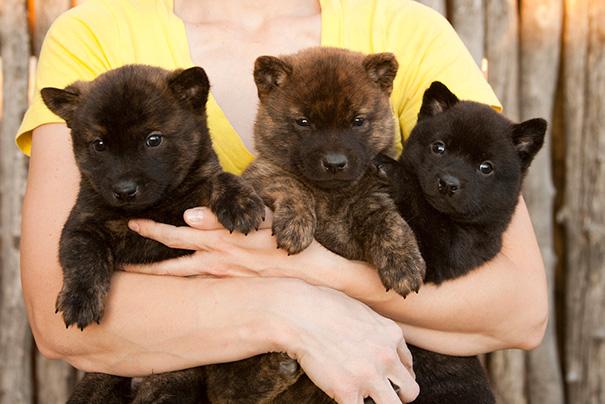 perros-regordetes-oseznos-parecidos-2 (14)