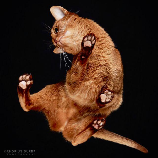 under-cats-fotos-gatos-debajo-andrius-burba (17)