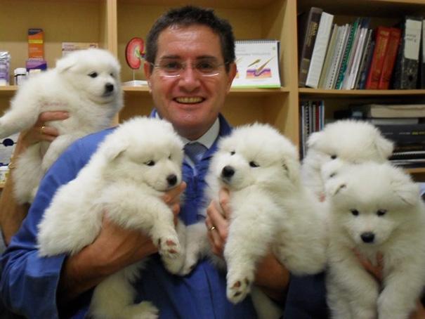 ventajas-trabajar-animales-veterinaria (1)