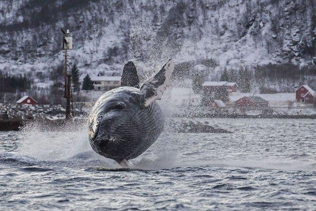 dia-mundial-ballenas (1)