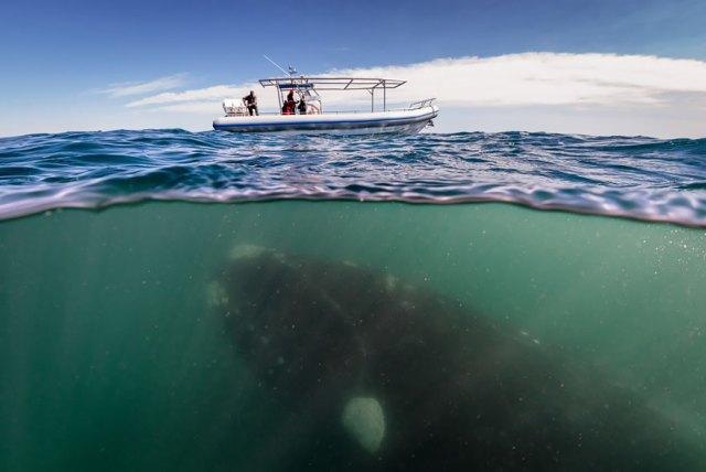 dia-mundial-ballenas (15)