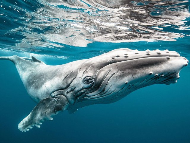 dia-mundial-ballenas (5)