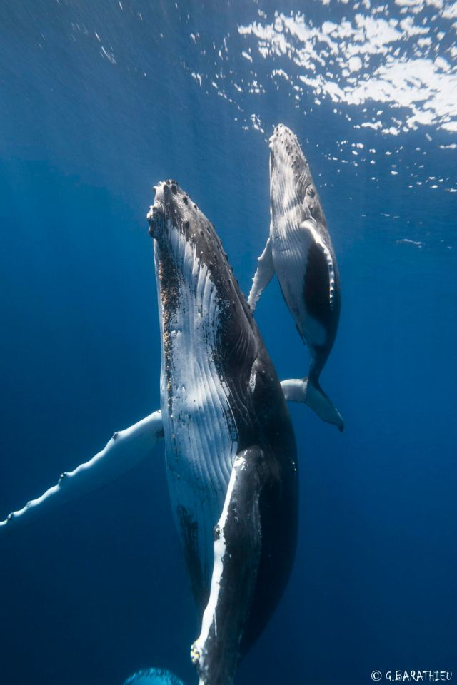dia-mundial-ballenas (54)