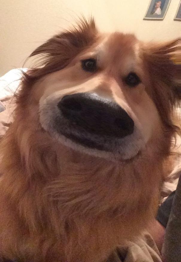filtro-snapchat-perro-dug-pelicula-up (2)