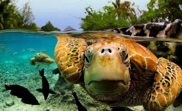 fotos-sobre-bajo-agua (11)