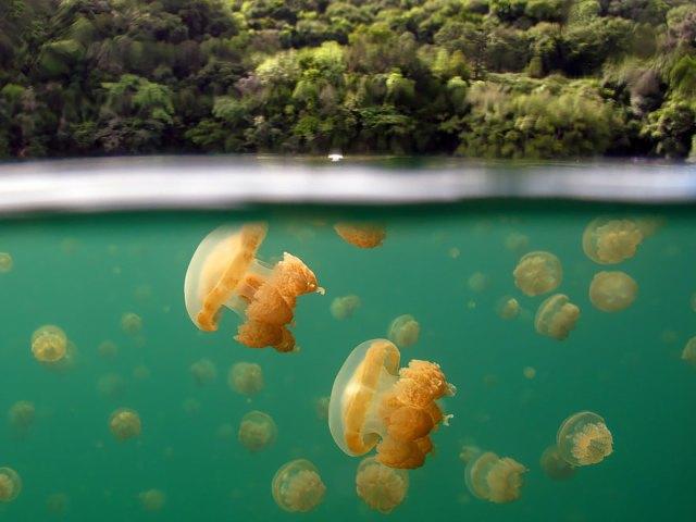fotos-sobre-bajo-agua (13)