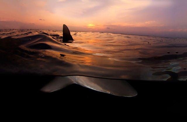 fotos-sobre-bajo-agua (14)