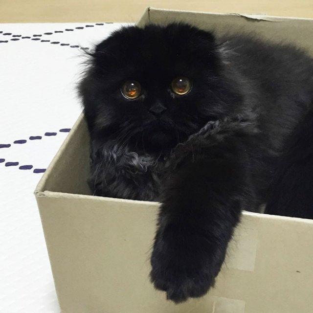 gato-negro-adorable-ojos-grandes-gimo (10)