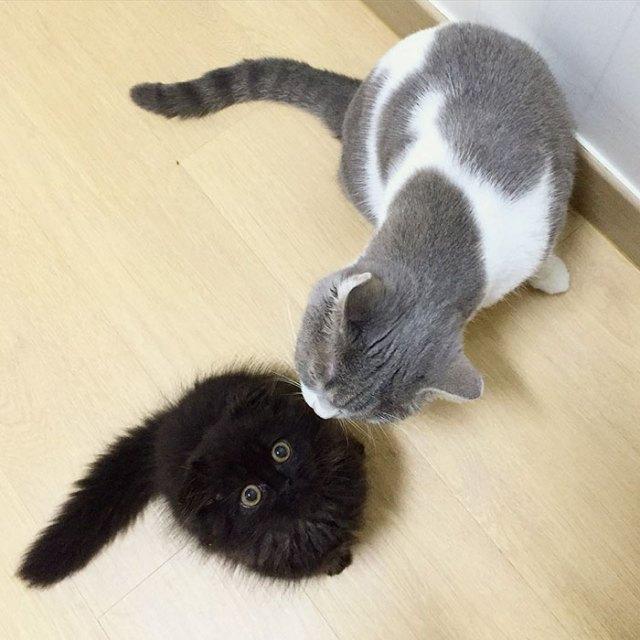 gato-negro-adorable-ojos-grandes-gimo (2)