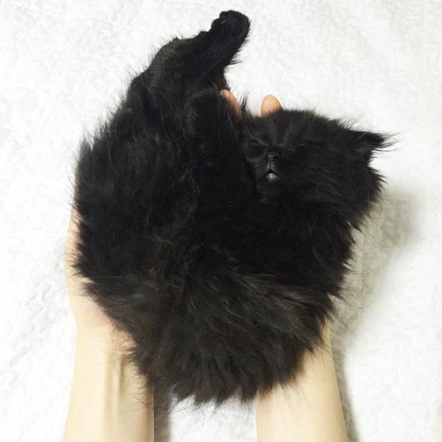 gato-negro-adorable-ojos-grandes-gimo (3)