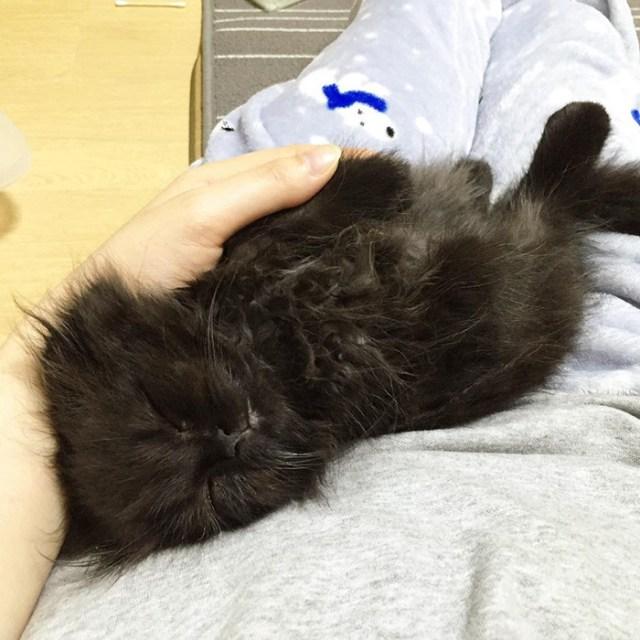 gato-negro-adorable-ojos-grandes-gimo (7)