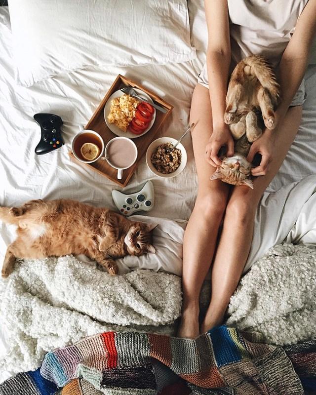 gatos-hermanos-huerfanos-rescatados-anyagrapes (5)