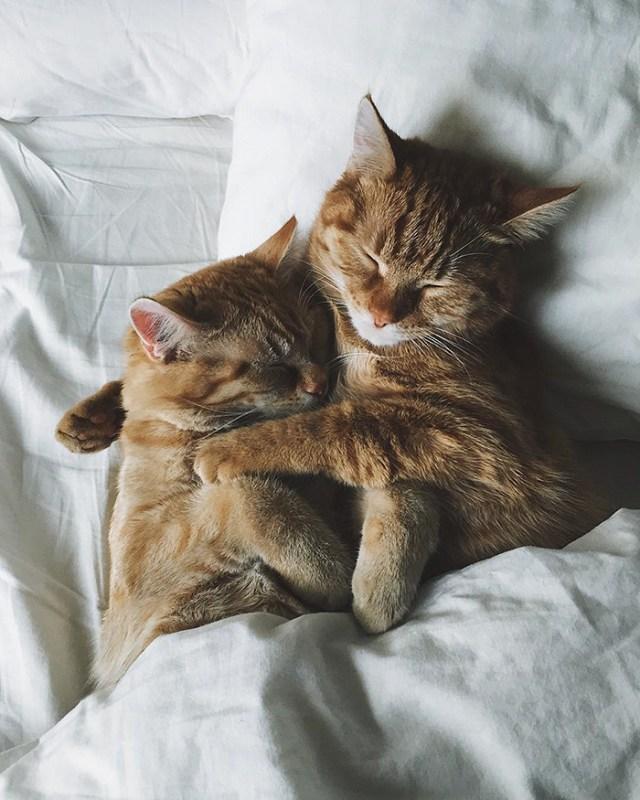 gatos-hermanos-huerfanos-rescatados-anyagrapes (7)
