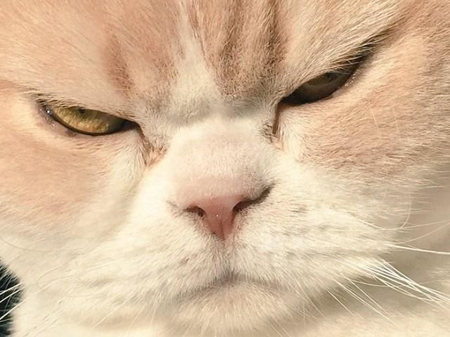 koyuki-gato-enfadado-japones (11)