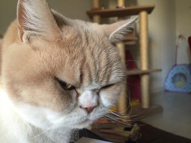 koyuki-gato-enfadado-japones (2)
