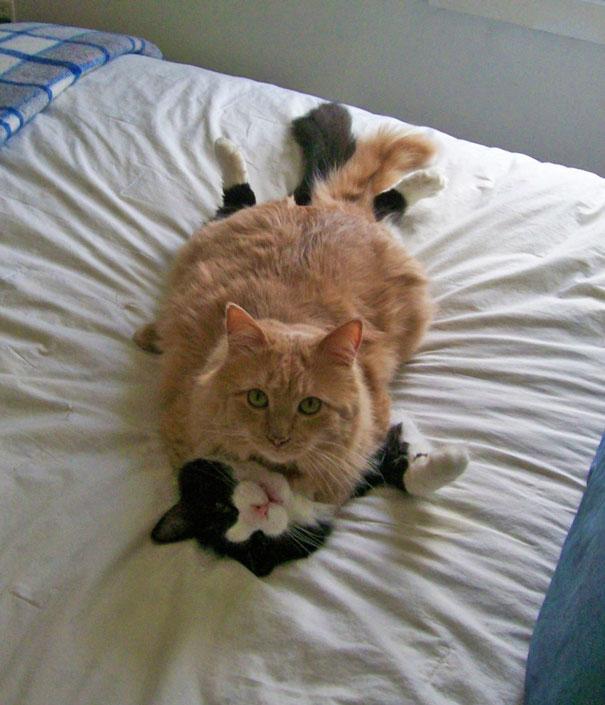 parejas-gatos-san-valentin (19)