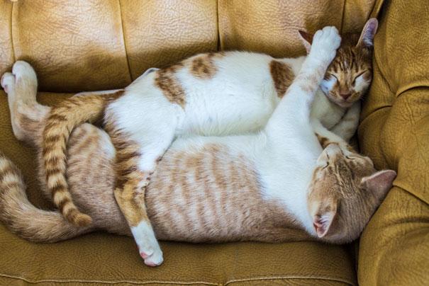 parejas-gatos-san-valentin (29)