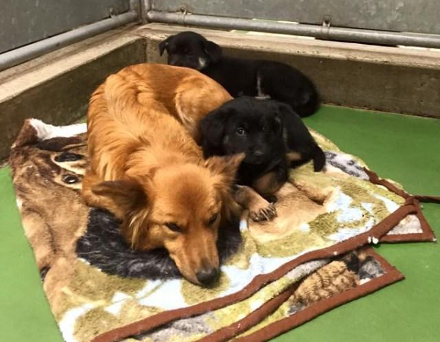 perro-escapa-consolar-cachorros-motel-mascotas-barkers (2)