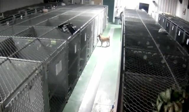 perro-escapa-consolar-cachorros-motel-mascotas-barkers (5)