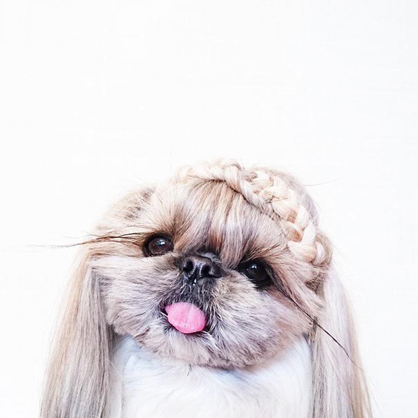 perro-kuma-peinados-diarios-instagram-moemn (10)