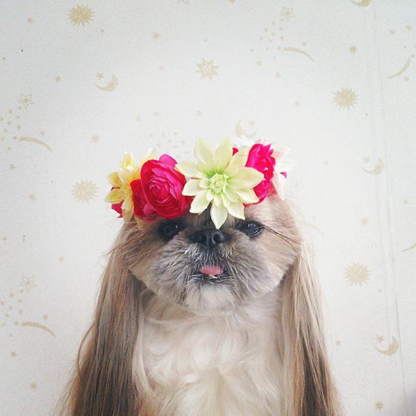 perro-kuma-peinados-diarios-instagram-moemn (5)