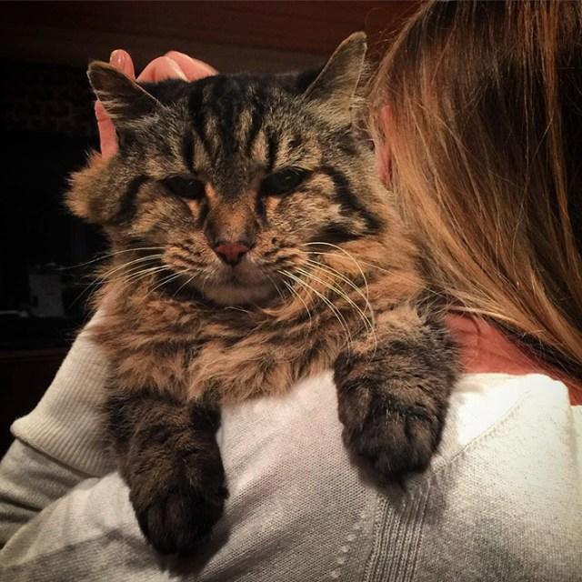 record-gato-viejo-mundo-corduroy (2)
