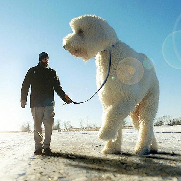 aventuras-juji-perro-gigante-photoshop-christopher-cline (12)