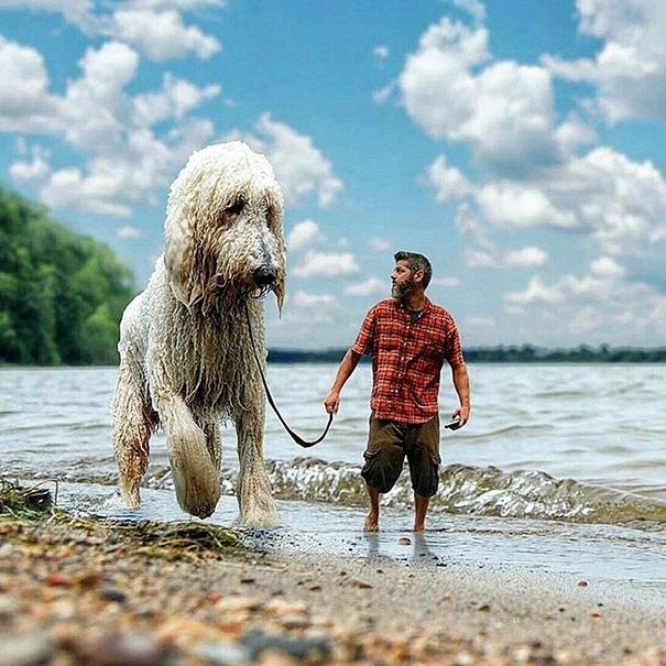 aventuras-juji-perro-gigante-photoshop-christopher-cline (13)
