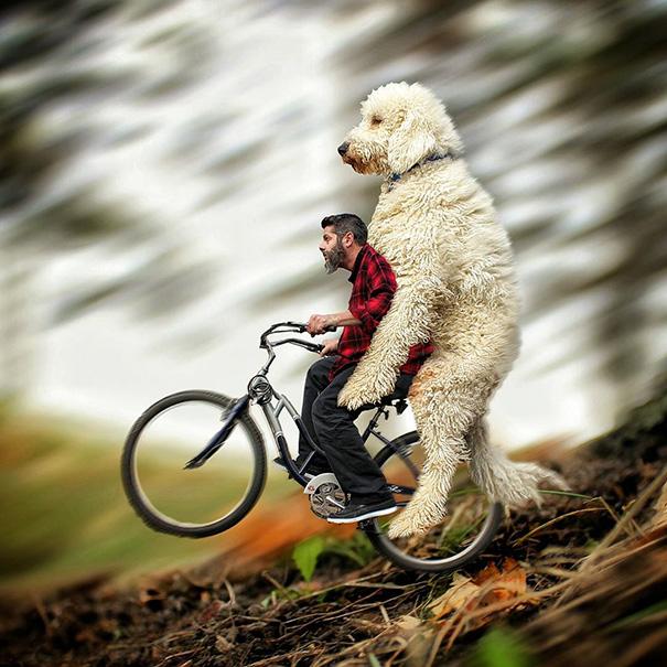 aventuras-juji-perro-gigante-photoshop-christopher-cline (14)