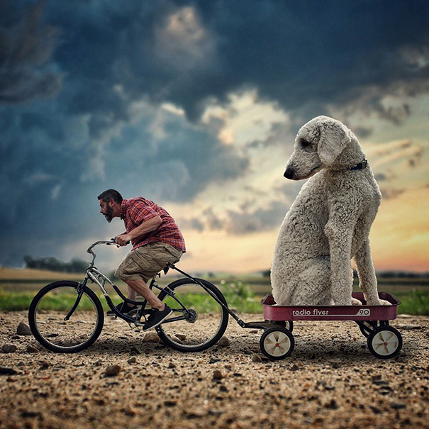 aventuras-juji-perro-gigante-photoshop-christopher-cline (5)