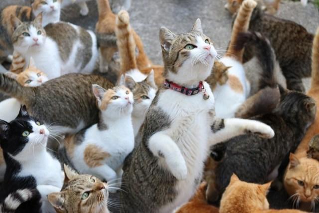 isla-gatos-aoshima-donaciones-comida-japon (2)