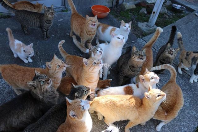 isla-gatos-aoshima-donaciones-comida-japon (9)