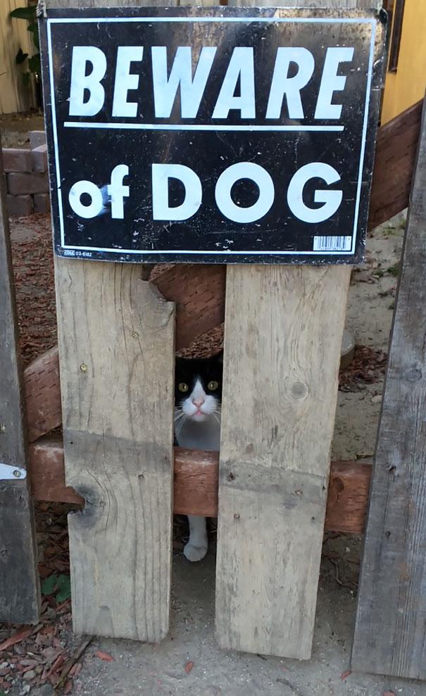 cuidado-con-el-perro (1)