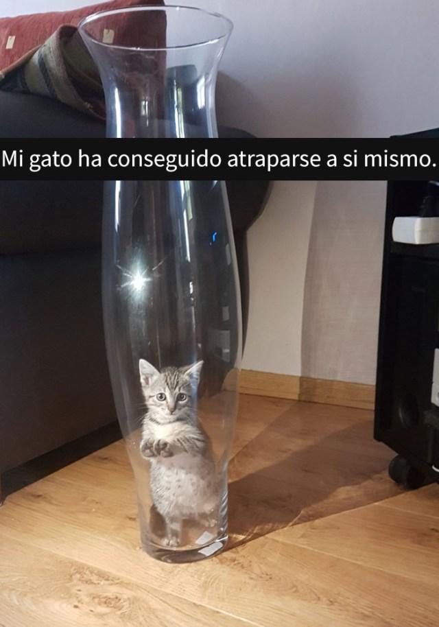gatos-snapchat-2