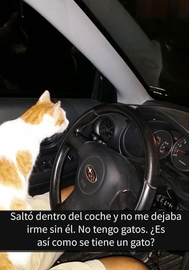 gatos-snapchat-4