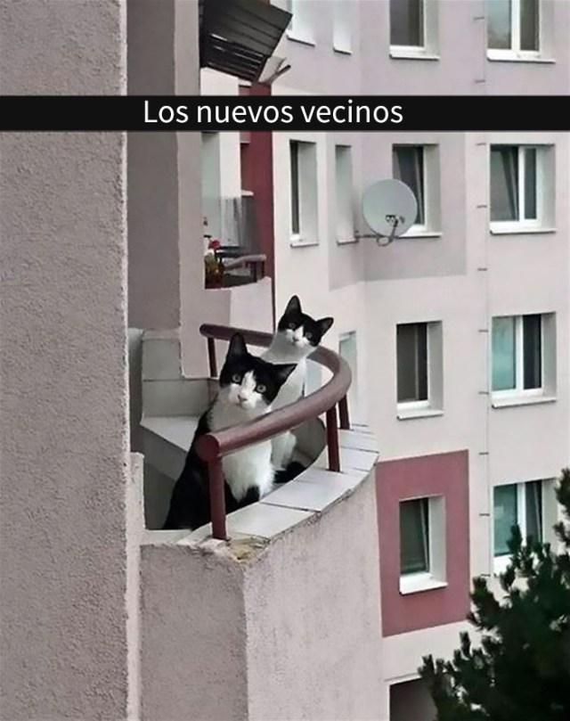 gatos-snapchat-7