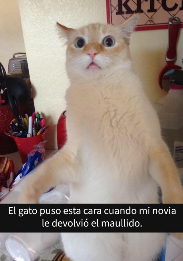 gatos-snapchat-8