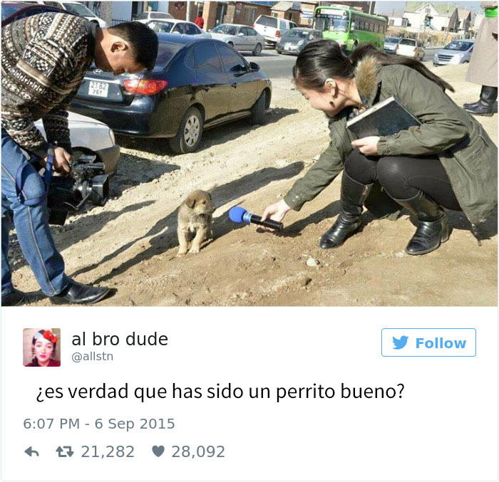 tuits-perros-1