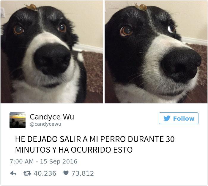 tuits-perros-6