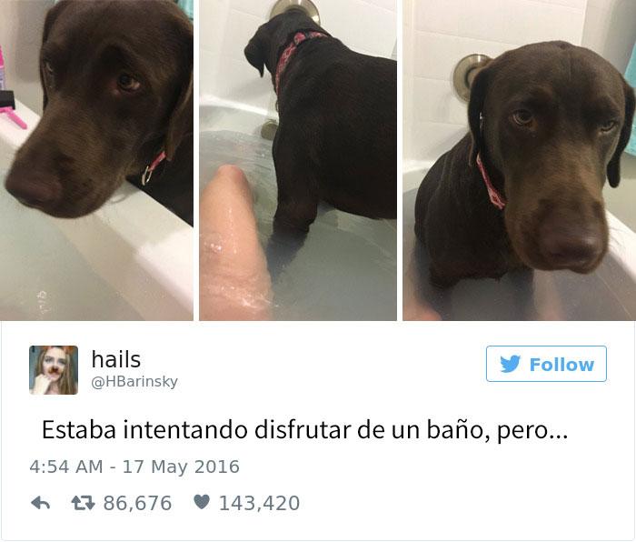 tuits-perros-8
