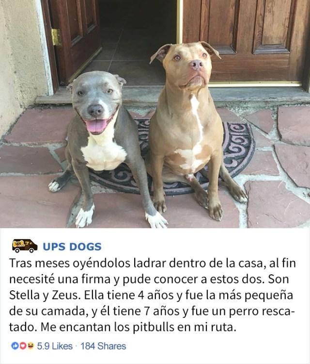 perros-ups-14