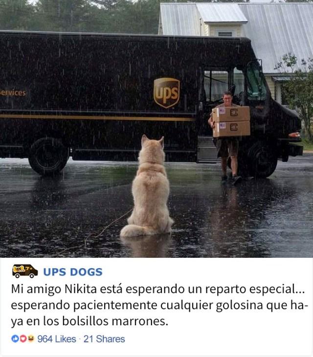 perros-ups-5