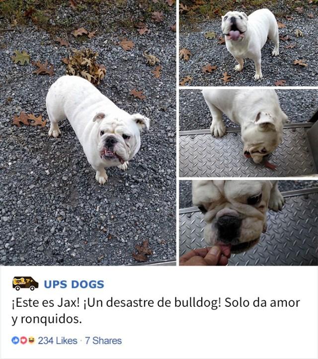 perros-ups-8