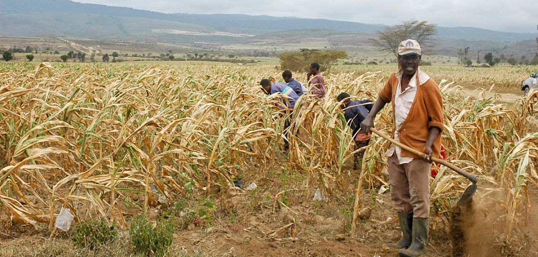 Image result for climate change in zimbabwe