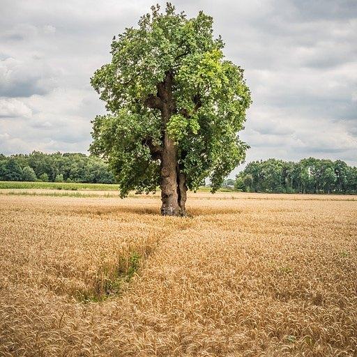 Feeling lonely #borninbeeld #ditislimburg @limburginbeeld