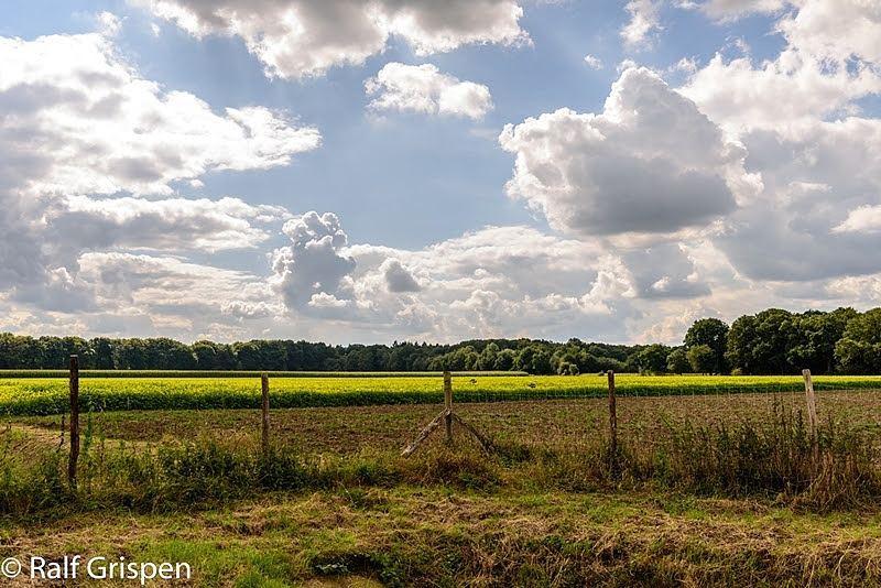 De natuur zo dicht bij huis in ons mooie #born #borninbeeld #limburginbeeld #limburg #liefdevoorlimburg zicht op #Limbrichterbos