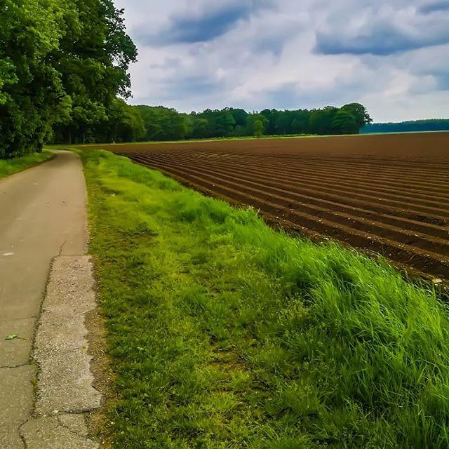 Wat een mooi contrast is dit Wandelend naar het limbrichterbos genietend van het uitzicht  #born #limburg #wandeling #hiking #limbrichterbos #liefdevoorlimburg #visitlimburg #discoverlimburg