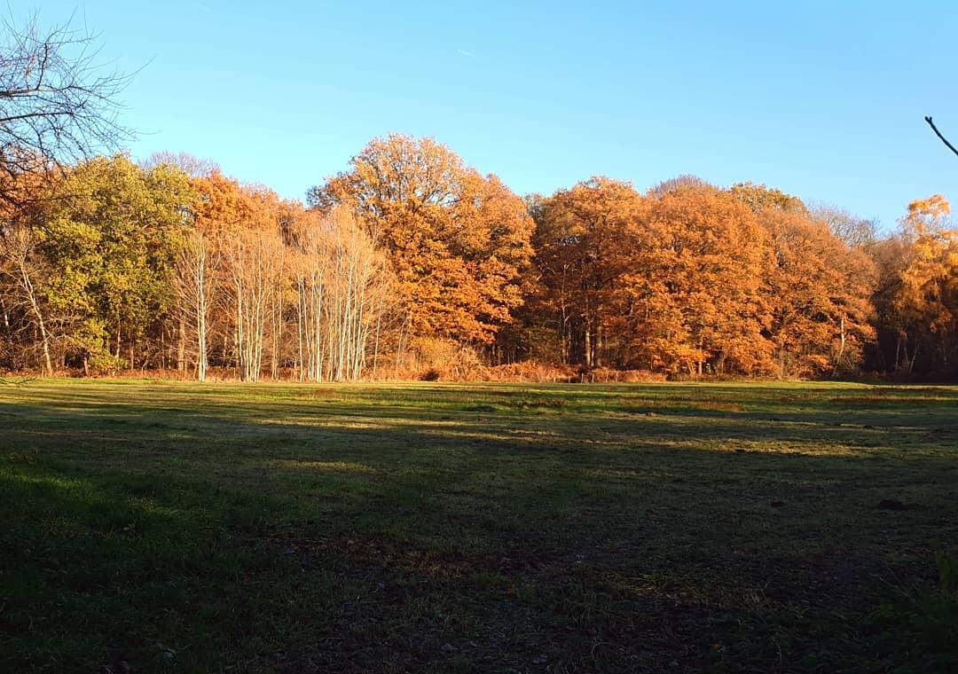 Jullie ook vandaag zo genoten van het mooie weer en onze mooie natuur in #Born ? #borninbeeld #limbrichterbos #liefdevoorlimburg